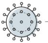 Obrazek przedstawia wizerunek okrągłego wirusa.